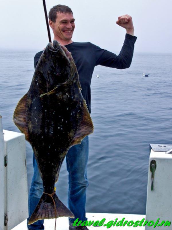 рыбалка на курильских тур
